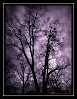purple tree by AlexBlood