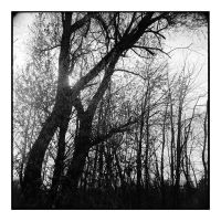 2014-333 My friends, the trees - scan0109 by pearwood