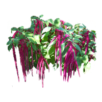 pinK falls foliage stock by Variety-Stock