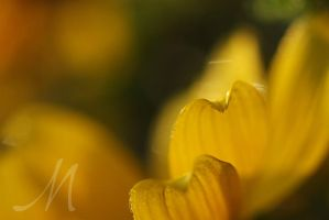 Yellow Curls by InLightImagery