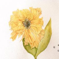 Yellow Flower by italy-gucciko