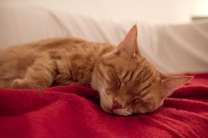 kater by herbstkind