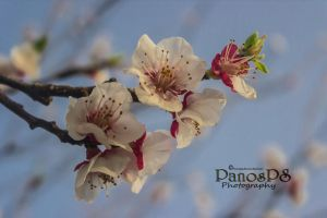 Sping by PanosPS