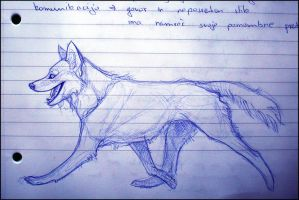 Study Notes Sketches: Husky by TheUrbanFox