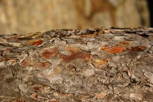bark texture _my favorite one by Aimelle-Stock