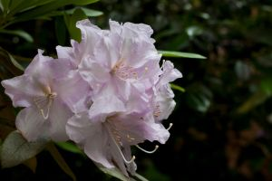 Light Pink Flower by CNStock