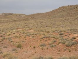 Trips to Petrified Forest NP 21 by Sting-raptor