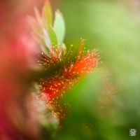 Green and red by sylvaincollet