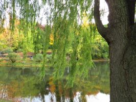Looking Past the Weeping Willow by Kitteh-Pawz