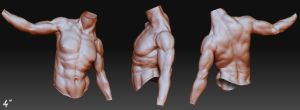 Male Anatomy Study by doaxbvbrocks
