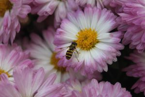 bee by hkiwi1846
