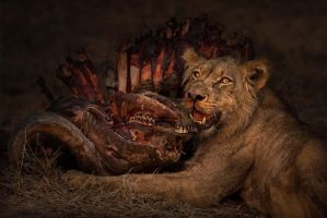 Life and Death in the African Bush by peterohara