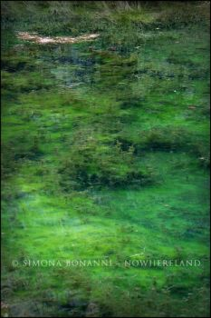 Deep green underwater by FataCorvina