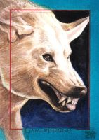 GHOST Game Of Thrones sketch card by JASONS21