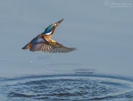 Kingfisher Exit by MorkelErasmus