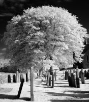 Galloway Churches - Buittle - The Tree by Okavanga