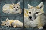 Kit Fox Soft Mount (1) by WeirdCityTaxidermy