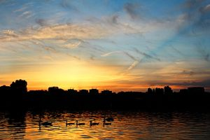 Sunset with swans by nicubunu
