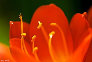 Le orange-rouge by engridearty