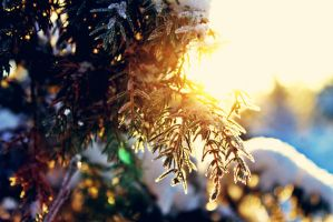 winter 5 by QualityCoffeeBean