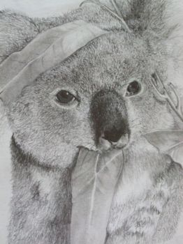 Koala bear by SarangOjena