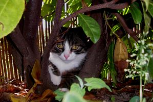 Cat In the Jungle by frimmi