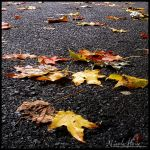 Fallen Leaves by LuvKillzTheDemon