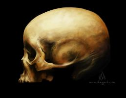 Skull Study by Quidfish