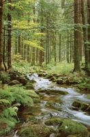 usriver in the forest by BetweenBloodAndBonds