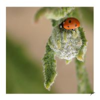 My First Lady Bug by shell4art