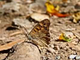 Butterfly I by Sonia-Rebelo