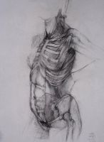 abdominal muscles by washingtonirwing