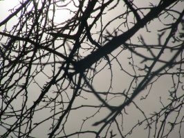 Black Branches - Stock by AtomicBrownie