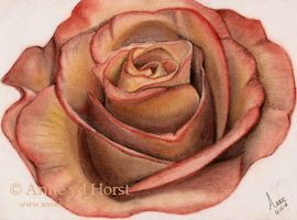 Pastel Rose by AnnevdHorst