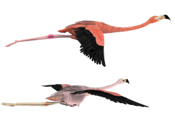 flying that way pink flamingos by madetobeunique