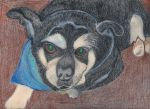 Bruiser In Mixed Media by FallOutWoman