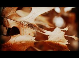 Dying Leaves by xLindarielx