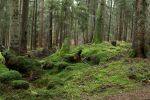 Forest Stock 046 by Malleni-Stock