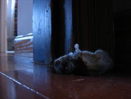 dead mouse by Ramrum