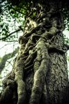 Roots by Jkeyte