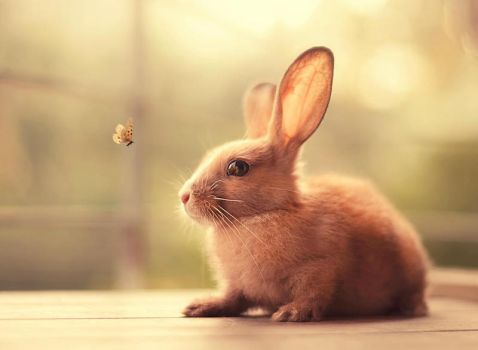 Hello There! by arefin03