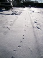 Snow kitty tracks by Tragic-Ashes