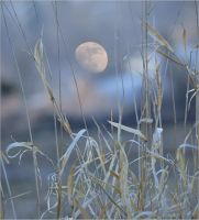 evening in the countryside by SvitakovaEva