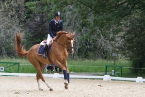 Chestnut Horse Warmup for ShowJumping FlyingChange by LuDa-Stock