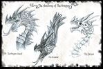 The anatomy of The Dragon by Ruth-Tay