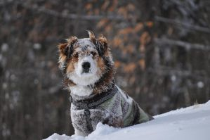 Snow Face by EquusPhoto