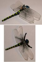 BUGS - dragon fly by JensStockCollection