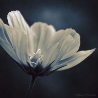 Cosmos2 by ThierryV