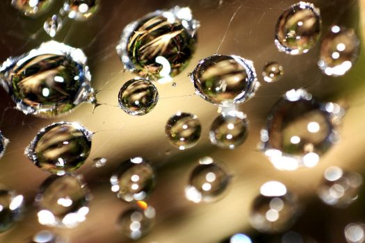 Waterdrops on a spiderweb by Forthewinwinx3