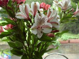 Flowers in a vase1 by crystal-stock